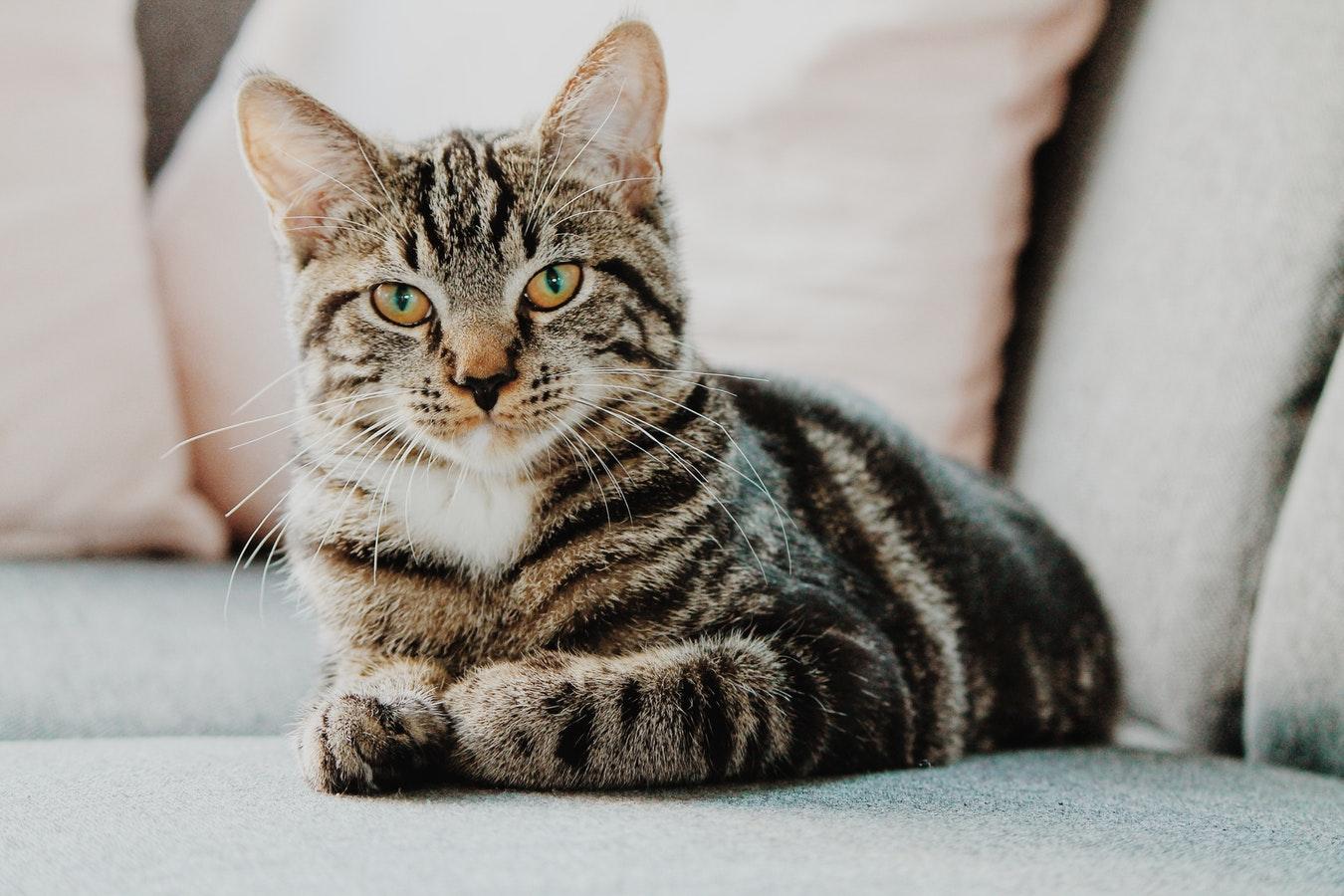Din kat kommer aldrig til at gå sulten i seng med foder fra nemfoder.dk