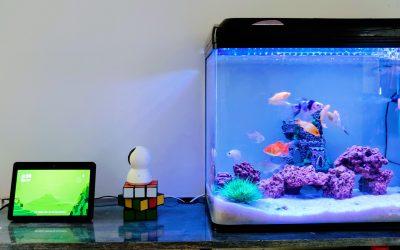 Pas på dine fisk med et akvariefilter