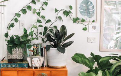Nemmere pleje af planter med en vandkande